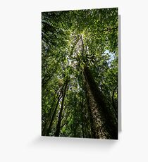 Rainforest Giants Greeting Card