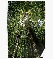 Rainforest Giants Poster
