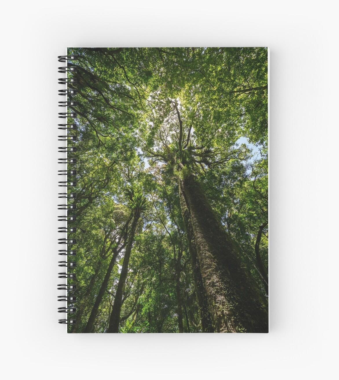 Rainforest Giants by Tony Steinberg