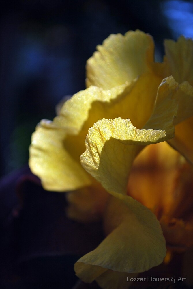 Beautiful Gown By Lorraine McCarthy by Lozzar Flowers & Art