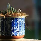 Succulent in the Sun by Carol James