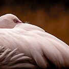 Flamingo At Rest by George Wheelhouse