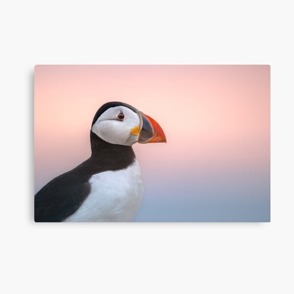 Puffin Sunset Profile Canvas Print