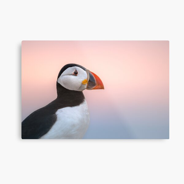 Puffin Sunset Profile Metal Print