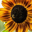 Sunflowers are for Bees by Richard Bozarth