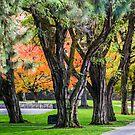 Fall Can't Hide by Richard Bozarth