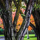 Fall is in the Air by Richard Bozarth