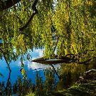 Willow  by Richard Bozarth