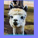 Al the alpaca  by Richard Bozarth