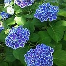 Pops of Blue by stumbelina