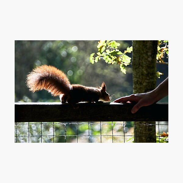 Learning Trust Photographic Print