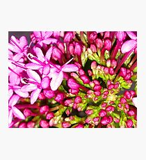 Dainty Pink Flower Photographic Print