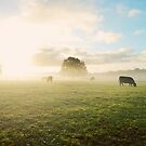 Morning Mist by Matthew Bonnington
