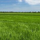 Hoi An Field.  by Michael Stocks