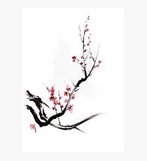 Cherry blossom tree sumi-e painting, sakura art print Photographic Print