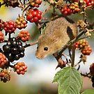 Harvest Mouse by Jane Horton