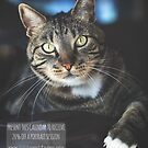 Purfection: moments in the life of a rescued cat by Peta Santoro