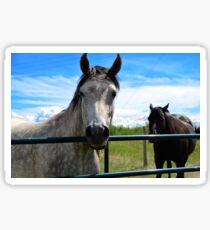 Hershey the Horse Sticker