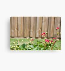 Strawberry Blossom Canvas Print