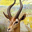 Gerenuk, East Africa by Jane Neill-Hancock