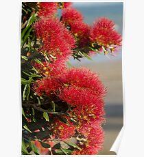 Christmas Tree Pohutakawa Flowers Poster