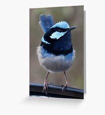 Superb Blue Wren - Malurus cyaneus Greeting Card