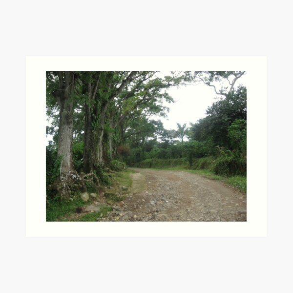 Mountain Road in Chiapas, MX Art Print
