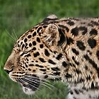 Spotty by Ray Clarke