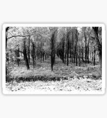 Autumn woods bw Sticker