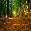 In the woods colorful by borjoz