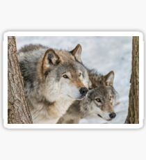 Timber Wolves Sticker
