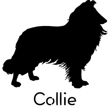 Collie by Brogy2323