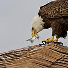 Eagle Eats Fish by TJ Baccari Photography