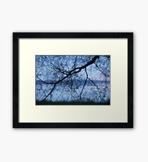 Willow At The Lake Framed Print
