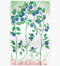 Blueberries vector Poster