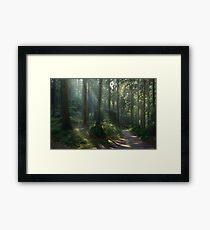 Saxony Forest Framed Print