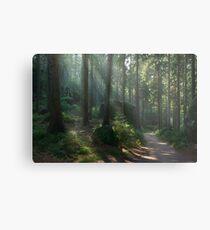 Saxony Forest Metal Print