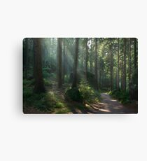 Saxony Forest Canvas Print
