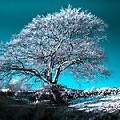 Infrared Tree by marting04