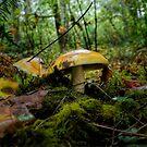 Amanita Wild Mushrooms by Charles & Patricia   Harkins ~ Picture Oregon