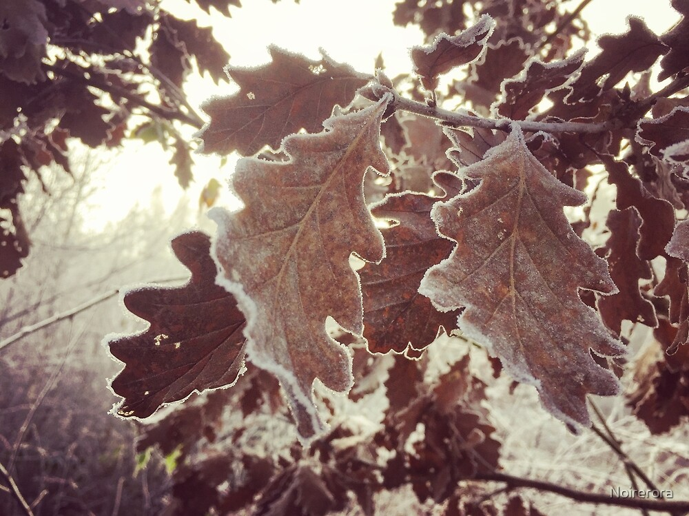 Frost on the oak branches by Noirerora