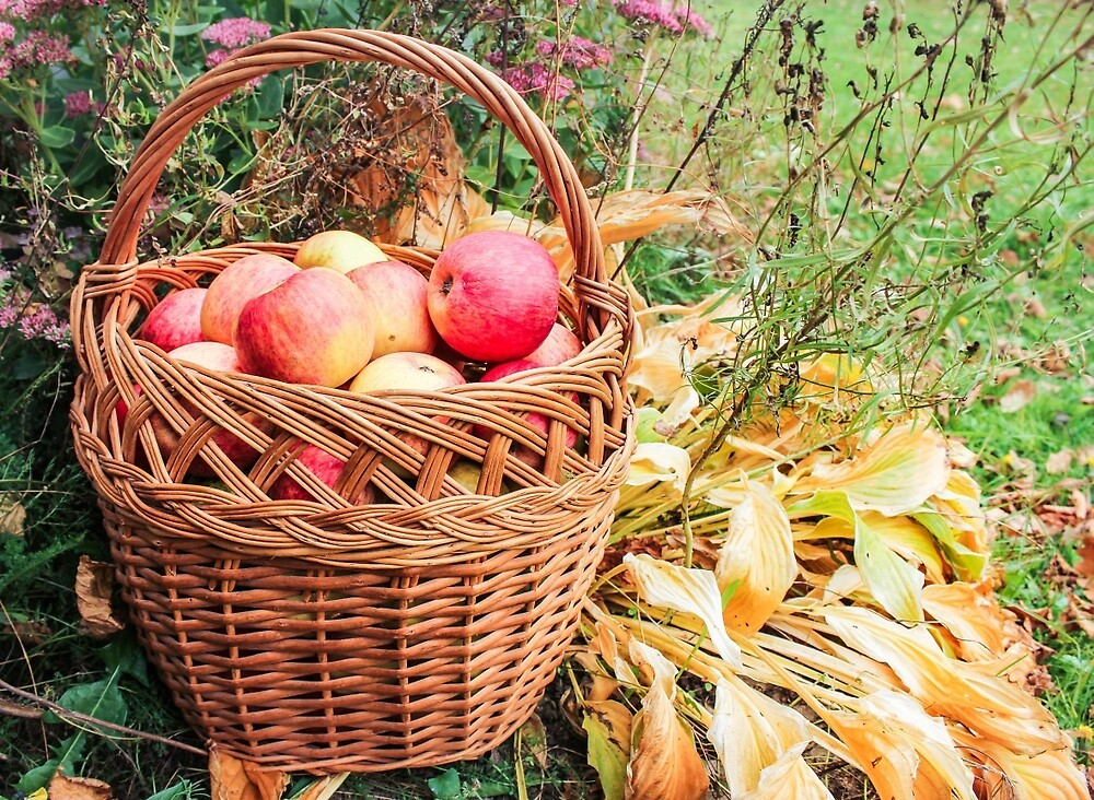 Basket with apples. by GermanS