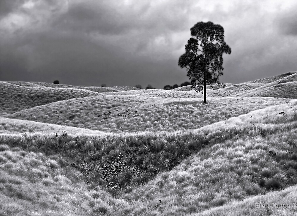 Field of Saddle Road Dreams 2 by Ellen Cotton
