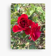 Field rose  Canvas Print