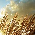 Prairie Sunset by Barbara  Brown