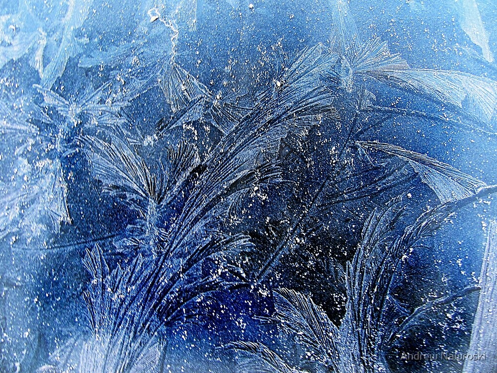 Morning Frost 2. by Andrew Nawroski