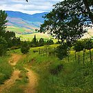 Country Road by Barbara  Brown
