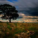 Lone Tree by Andy Beattie