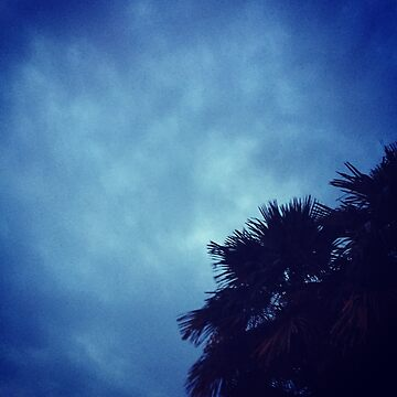 Palm Tree Sillouette with a Blue Sky by Ravenclaww04