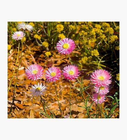 Wildflowers, Kings Park, Perth, Western Australia.. Photographic Print